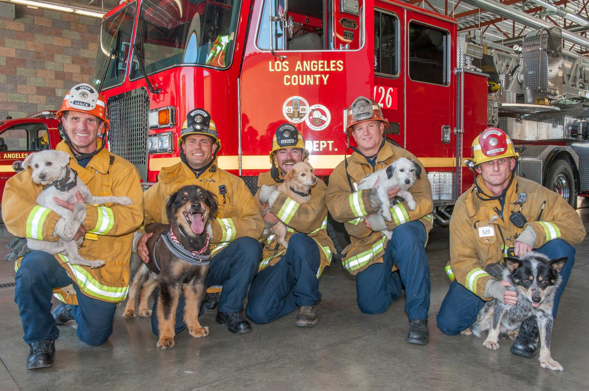 Firemen and Dogs